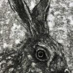 Shirley's Hare